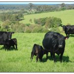 NEXT FARMERS' NETWORK EVENT – Improving Reproduction Rates in Beef – Wed 4th Oct