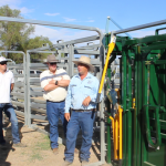 Accredited Livestock Handling Clinics Stressed out cattle – How much is it costing you?